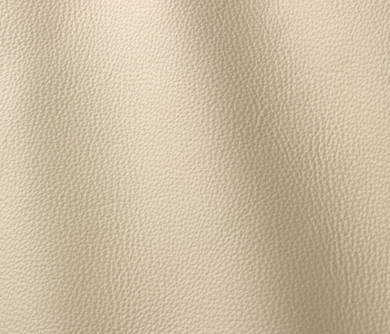 Prescott 201 ivory by Gruppo Mastrotto | Natural leather