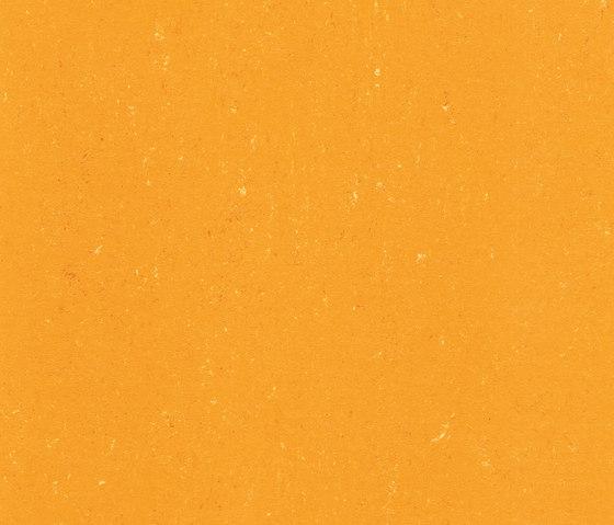 Colorette LPX 131-171 by Armstrong | Linoleum flooring