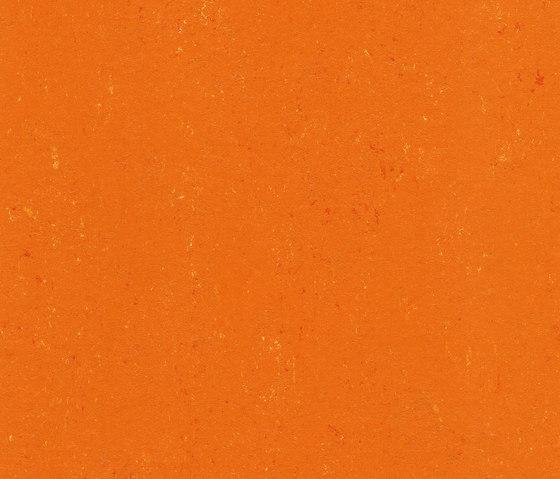 Colorette LPX 131-170 by Armstrong | Linoleum flooring