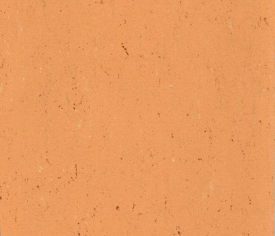 Colorette LPX 131-078 by Armstrong | Linoleum flooring