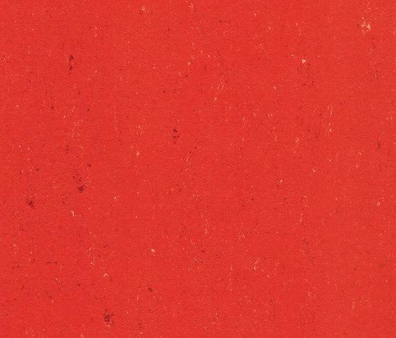 Colorette LPX 131-118 by Armstrong | Linoleum flooring