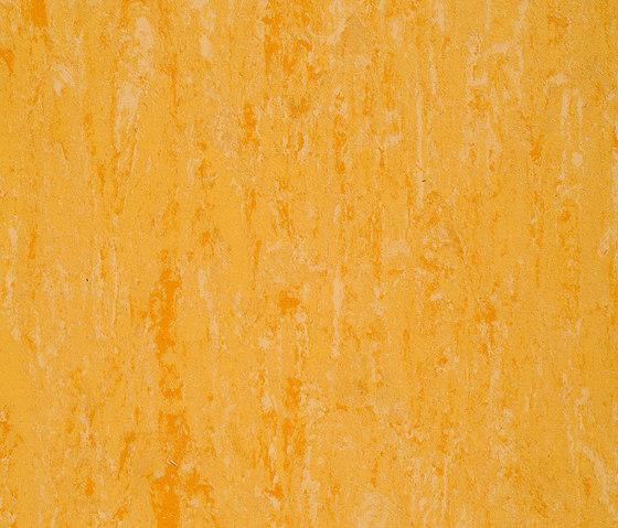 Linodur LPX 151-074 by Armstrong   Linoleum flooring