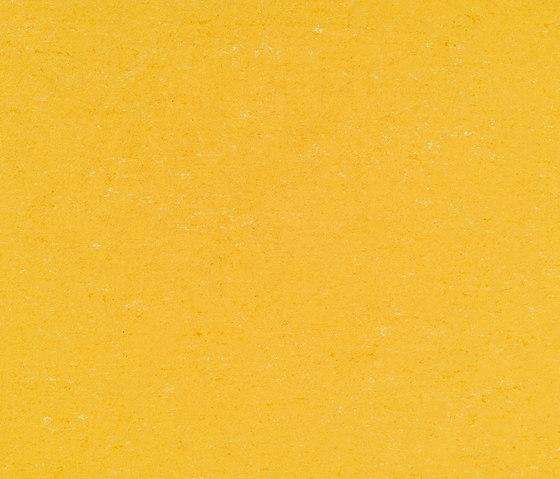 Colorette Acoustic Plus LPX 2131-001 by Armstrong | Linoleum flooring