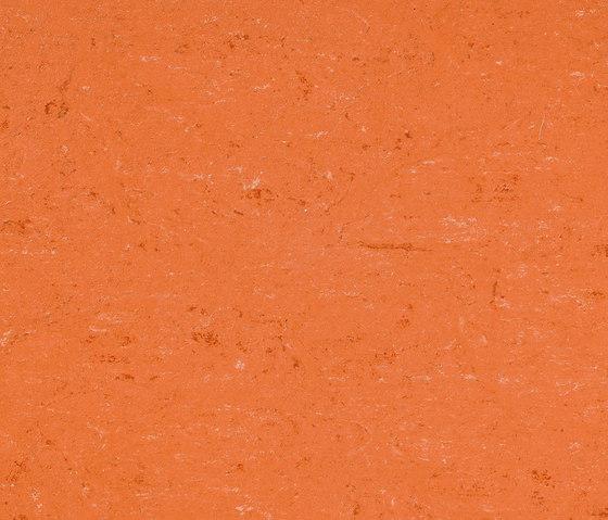 Colorette LPX 131-016 by Armstrong | Linoleum flooring