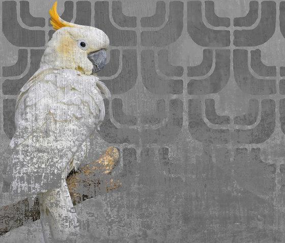COCKATOO di Wall&decò   Quadri / Murales