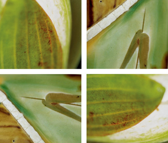 Lolling Waterlilies de tela-design | Láminas de plástico