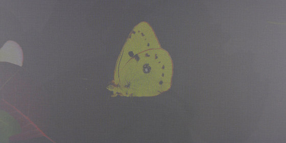 PAPILLON VOILE - 192 by Création Baumann | Panel glides