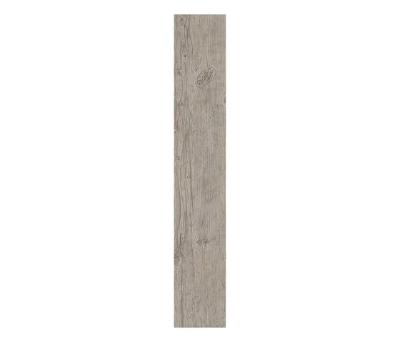 Axi Grey Silver Fir by Atlas Concorde | Tiles