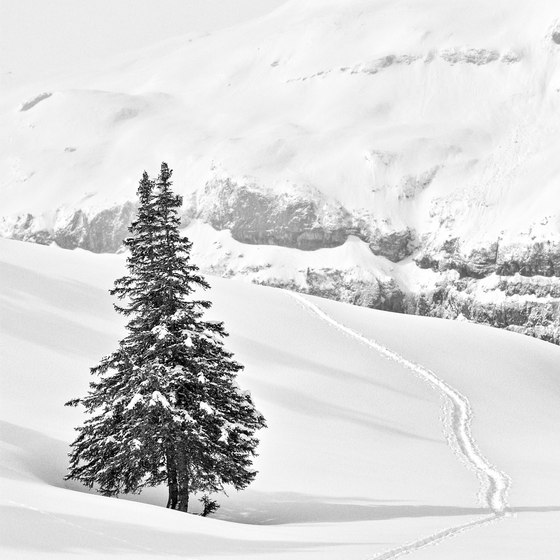 Alps | Two pines on the Türliboden de wallunica | Arte