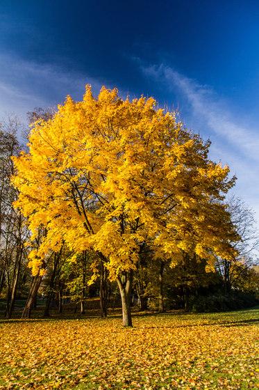 Landscape | Beautiful autumn landscape in Rhineland-Palatinate by wallunica | Wall art / Murals
