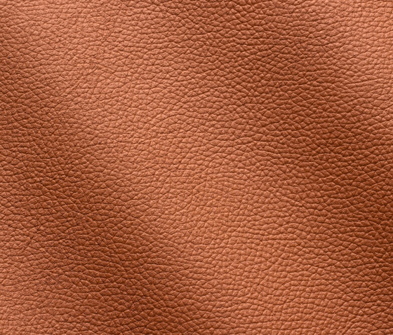 Zenith 9010 avana by Gruppo Mastrotto | Natural leather