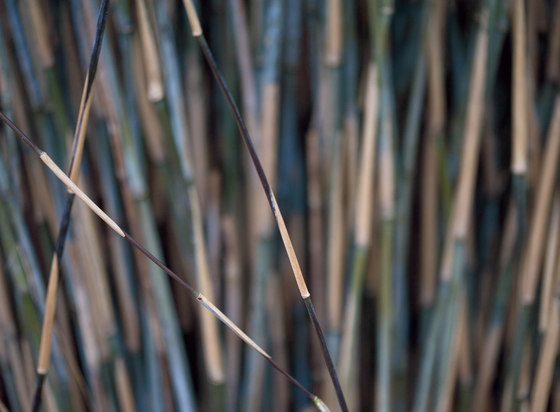 Photo | Bamboo by Mr Perswall | Bespoke wall coverings