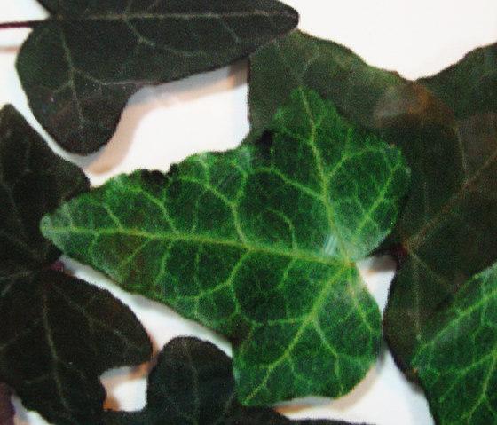Charisma Glass Ivy de complexma | Vidrios decorativos