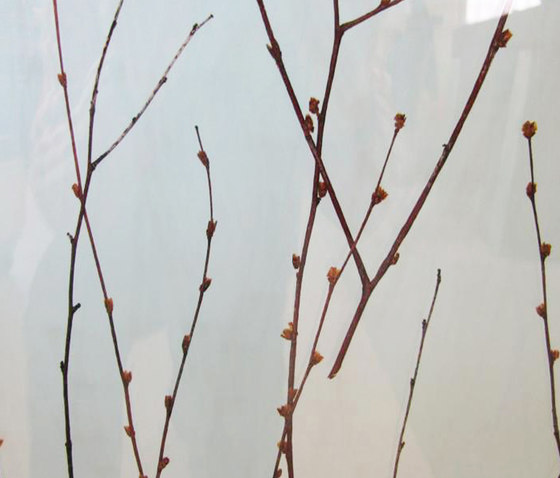 Charisma Glass Birch Branch de complexma | Decorative glass