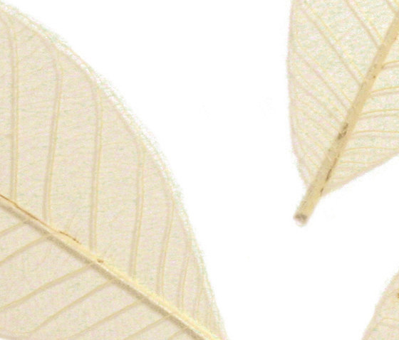 Charisma Glass Leafes de complexma | Vidrios decorativos