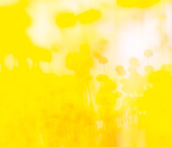 Flora Color | 31.096.1 | Foto von ornament.control | Holz Platten