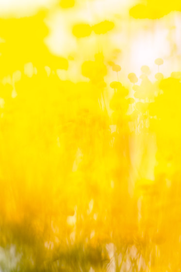 Flora Color | 31.096.1 | Photo by ornament.control | Wood panels