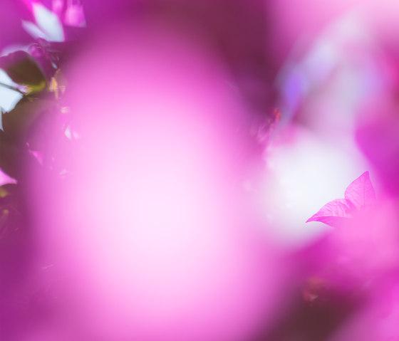 Flora Color | 31.097.1 | Photo by ornament.control | Wood panels