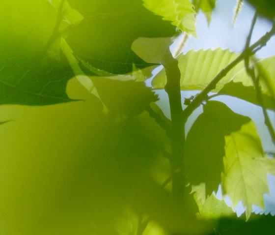 Flora Color | 31.100.1 | Foto von ornament.control | Holz Platten