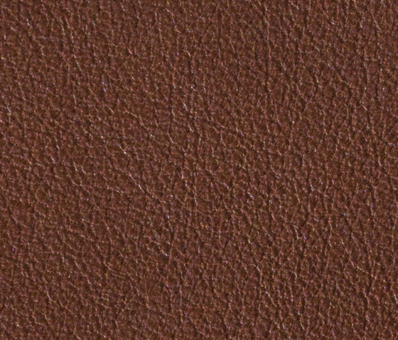 Gusto Choclat by Alphenberg Leather | Natural leather