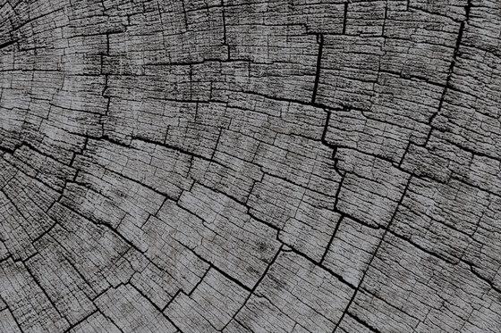 Crust Mantis de GLAMORA | A medida