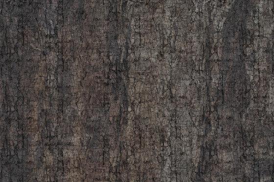 Crust Moth von GLAMORA | Wandbeläge