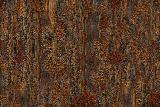 Crust Cricket by GLAMORA | Bespoke wall coverings