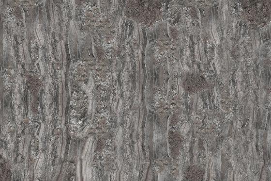 Crust Cricket von GLAMORA | Wandbeläge