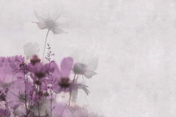 Frames Meadow de GLAMORA | A medida