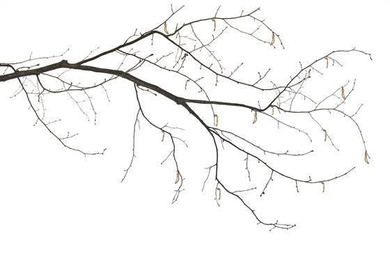 Essence Sakura di GLAMORA   Rivestimenti su misura