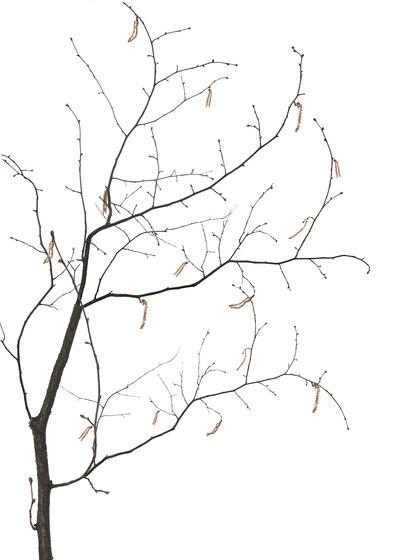 Essence Sakura di GLAMORA | Rivestimenti su misura