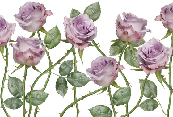 Essence New Romantic de GLAMORA | A medida