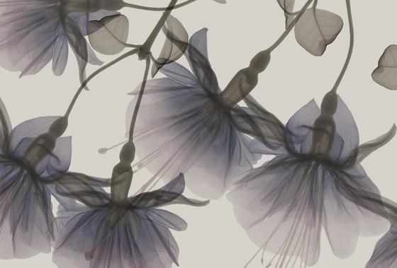 Visions Dandy by GLAMORA | Bespoke wall coverings