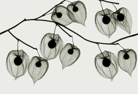 Visions Asakusa di GLAMORA | Rivestimenti su misura
