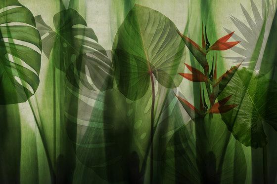 Paysage Equatorial Jungle de GLAMORA | A medida