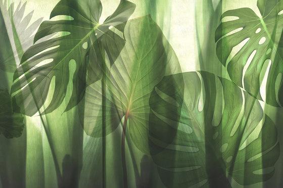 Paysage Equatorial Jungle de GLAMORA   A medida