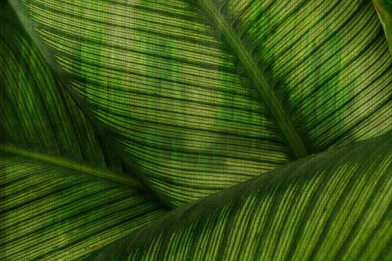 Paysage Leaf de GLAMORA | A medida