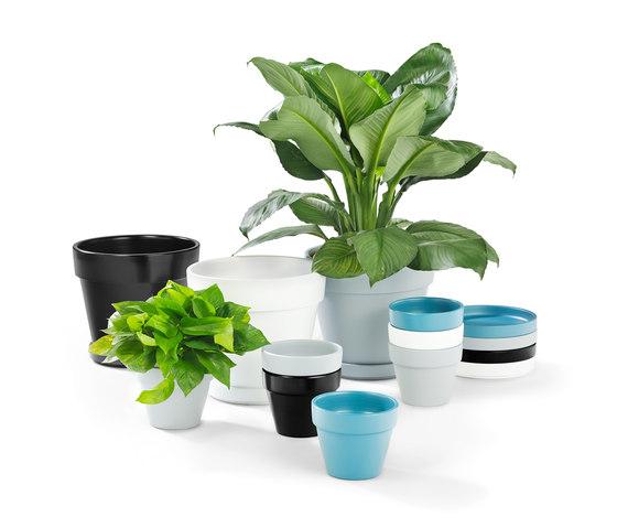 Terra de Les Basic   Pots de fleurs