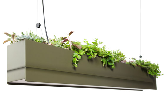 Bridge by Greenworks | Suspended lights