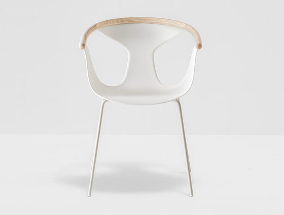 Fox armchair 3726 by PEDRALI | Restaurant chairs