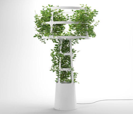 Sophie planted von lasfera | Allgemeinbeleuchtung