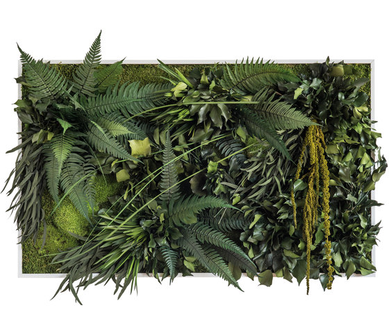 plant picture   jungle 100x60cm by styleGREEN   Living / Green walls