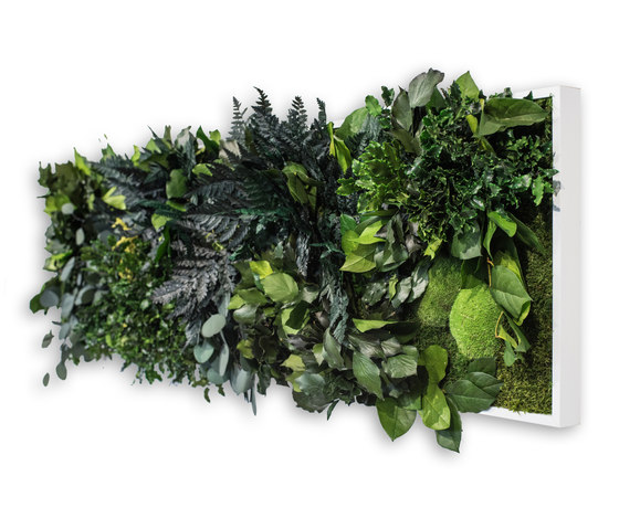 plant picture | jungle 140x40cm by styleGREEN | Living / Green walls