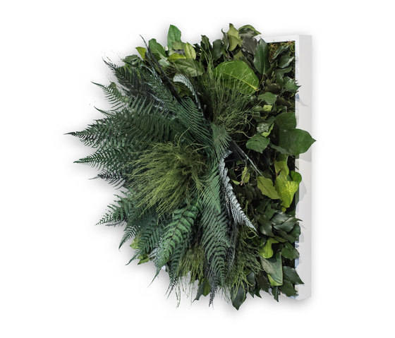 plant picture | jungle 55x55cm by styleGREEN | Living / Green walls