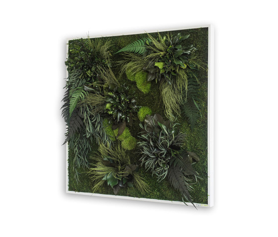 plant picture | plant islands 80x80cm by styleGREEN | Living / Green walls