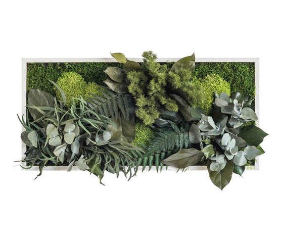 plant picture | plant islands 57x27cm by styleGREEN | Living / Green walls