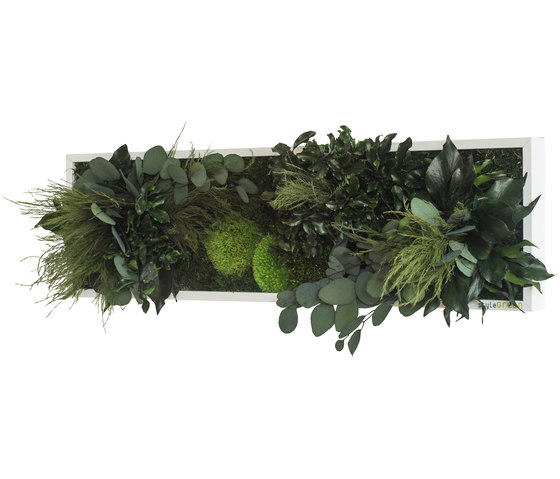 plant picture | plant islands 70x20cm by styleGREEN | Living / Green walls
