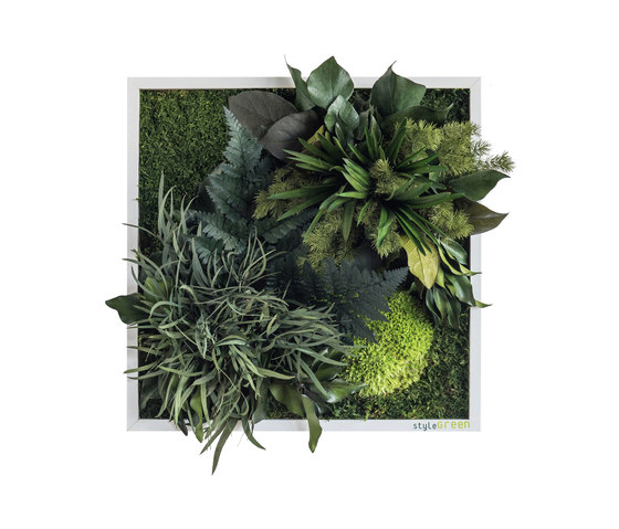 plant picture   plant islands 35x35cm by styleGREEN   Living / Green walls