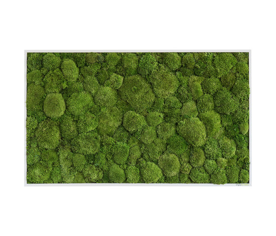 moss picture | pole moss picture 100x60cm by styleGREEN | Living / Green walls