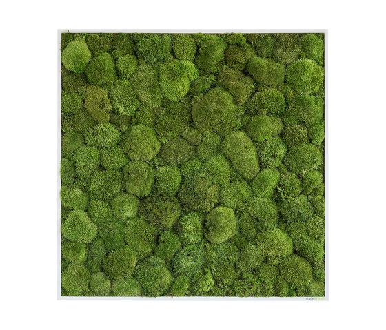 moss picture   pole moss picture 80x80cm by styleGREEN   Living / Green walls